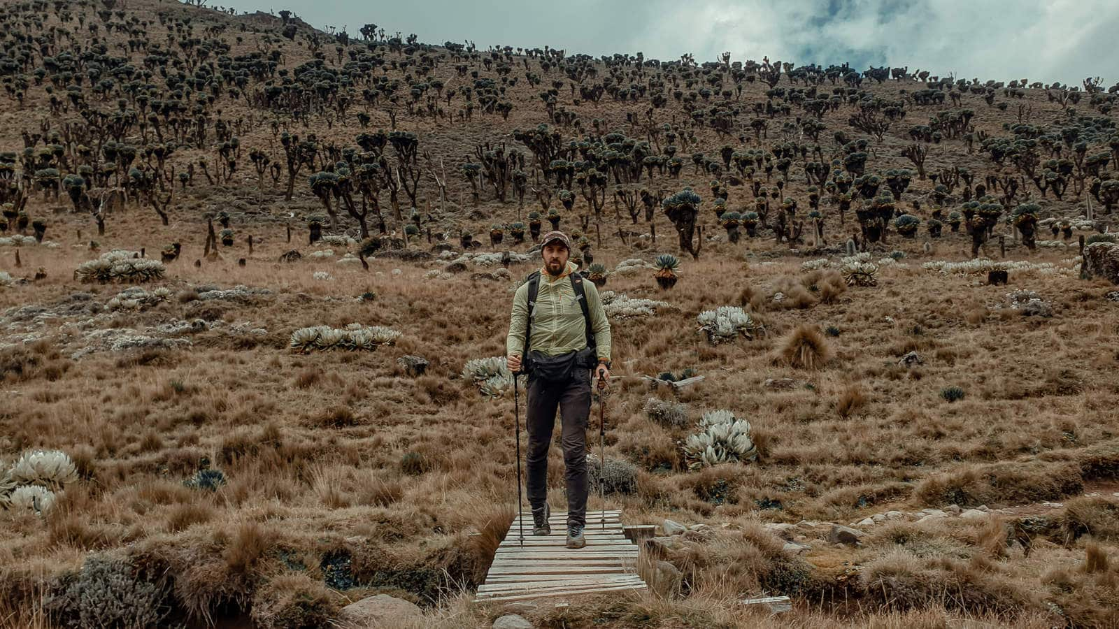 When I researched about the Naro Moru route to Mt. Kenya, I often encountered reviews that it is the least scenic and the least beautiful route. Well I don't know how the other routes look like, but I found this one stunning, and I hope this few photos manage to show that.
