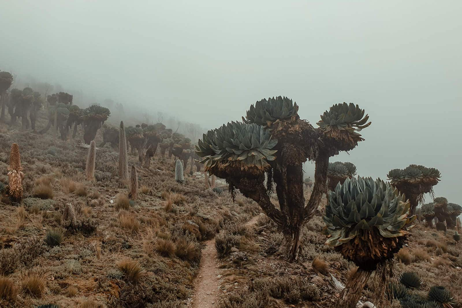 Mt Kenya, Naro Moru route, solo, without guide, in two days